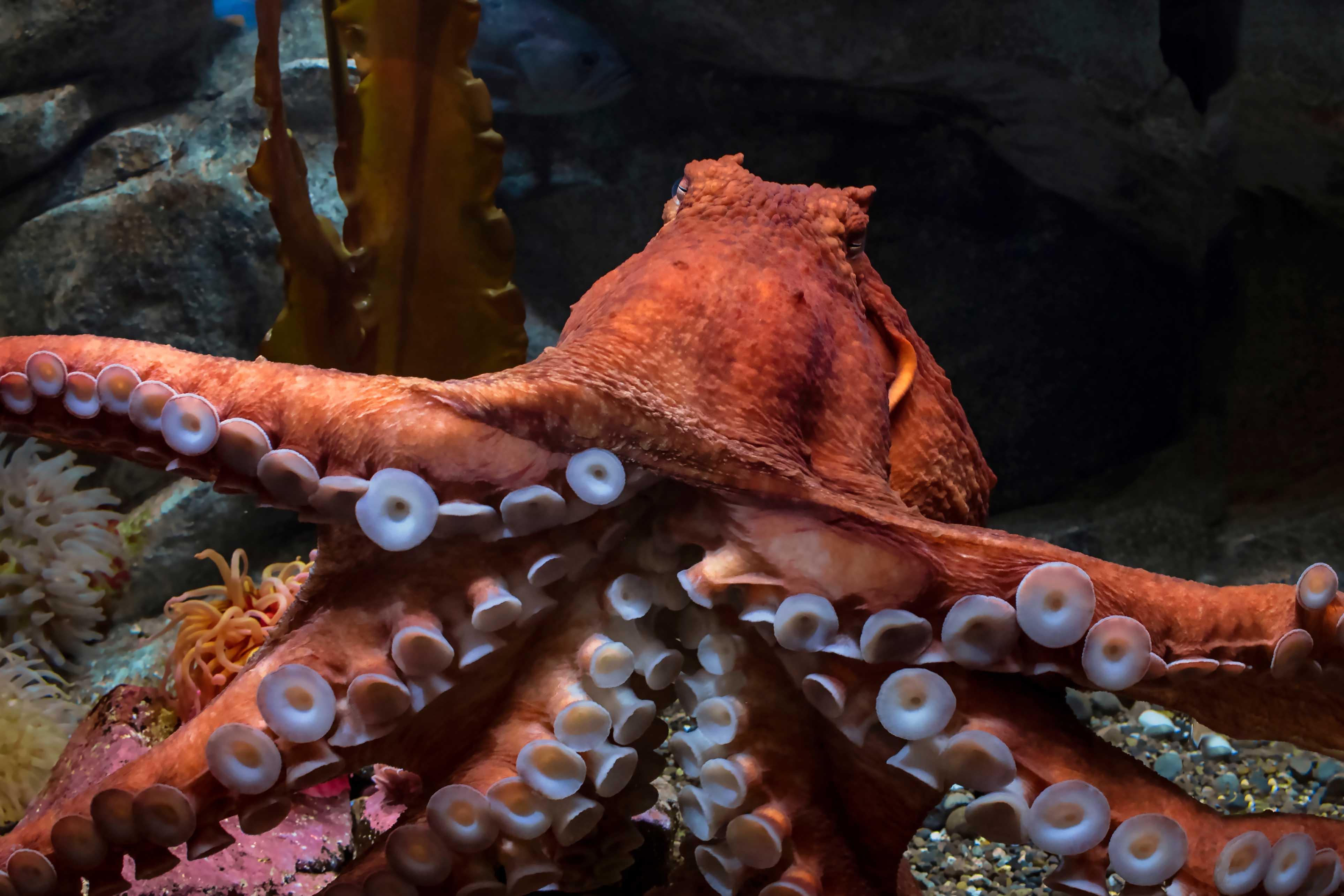 Giant Octopus Tentacles.jpg