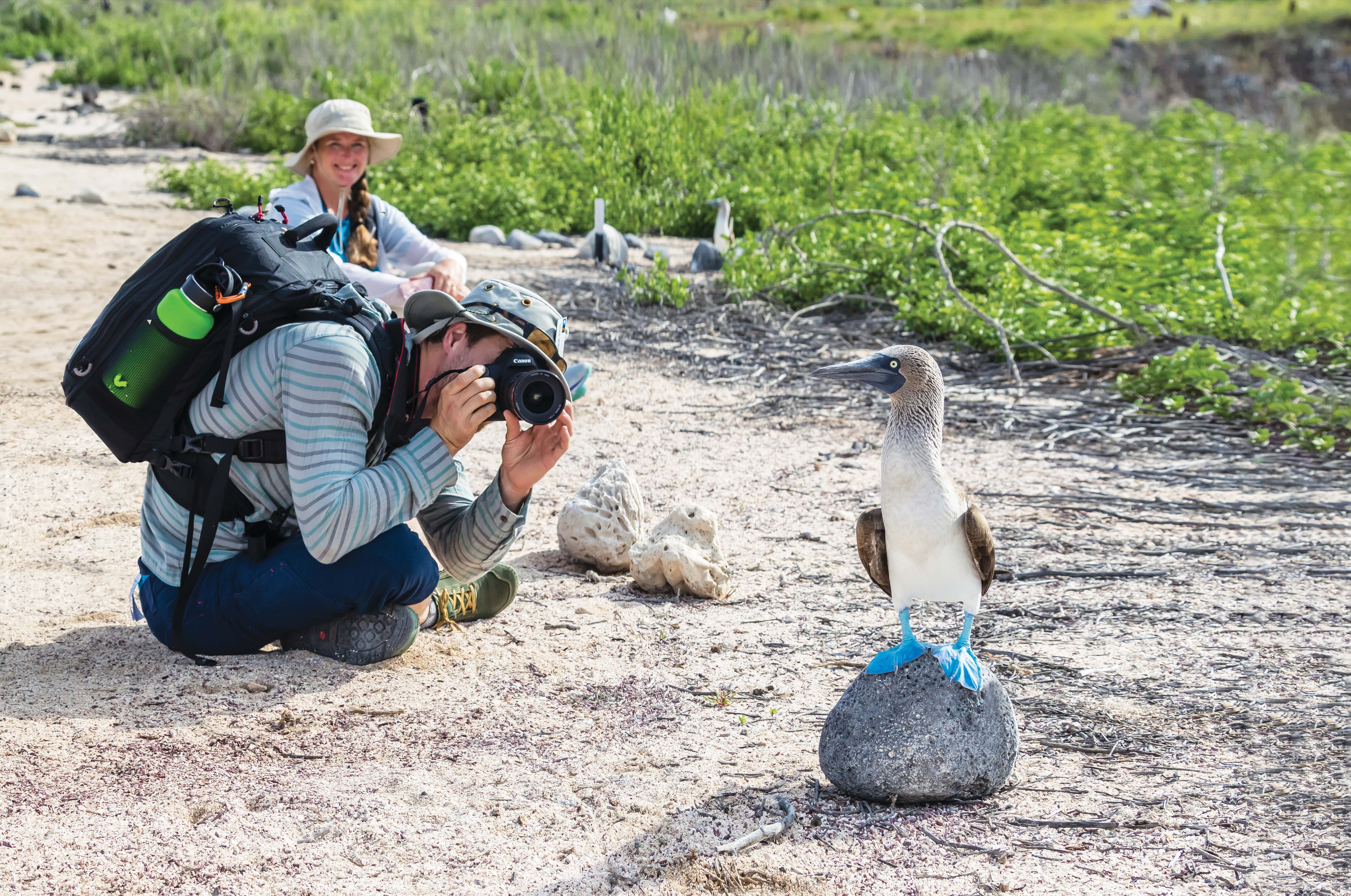 Blue Footed Booby and friends.jpg