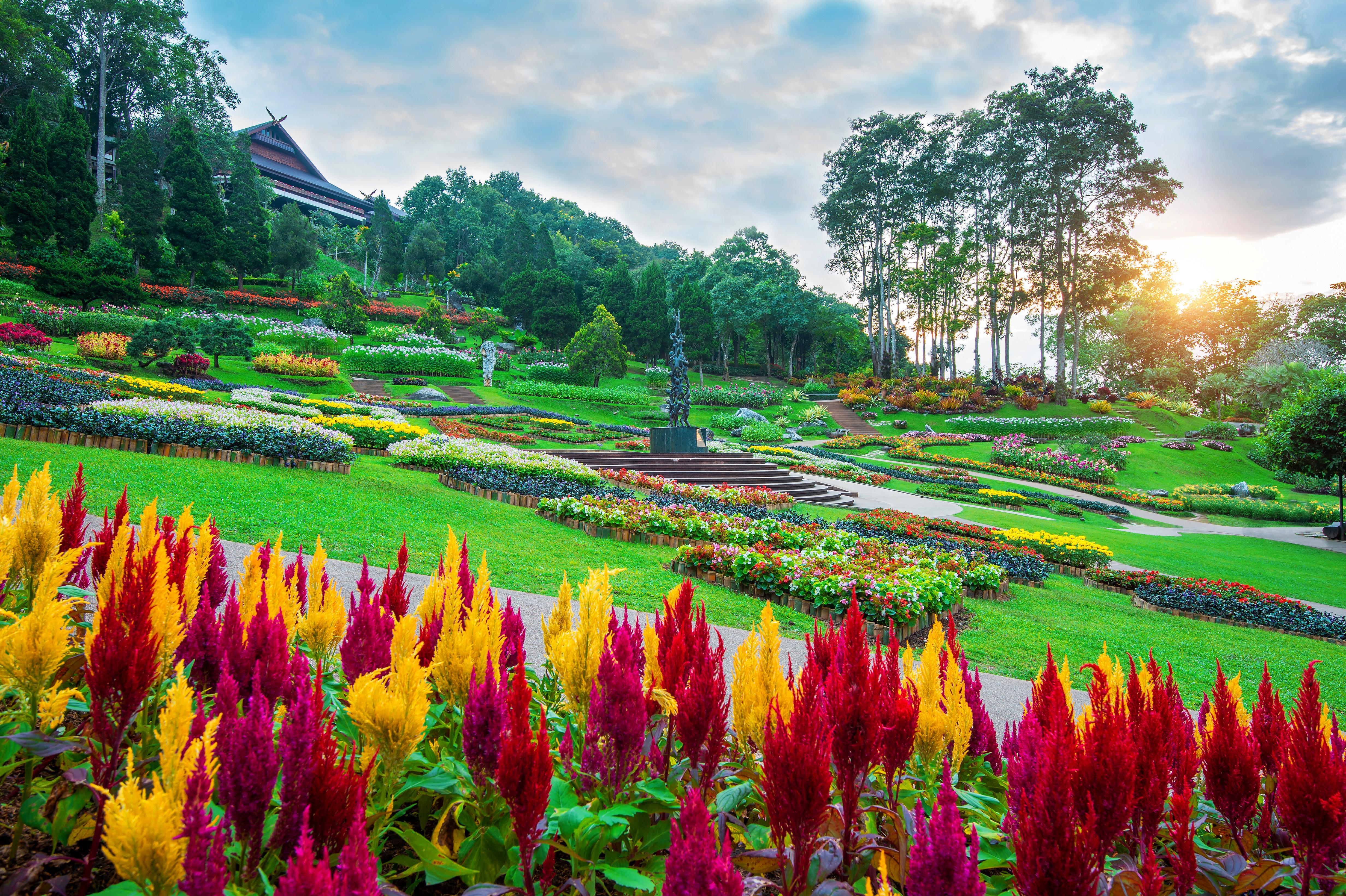 garden-flowers-mae-fah-luang-garden-locate-doi-tung-chiang-rai-thailand.jpg
