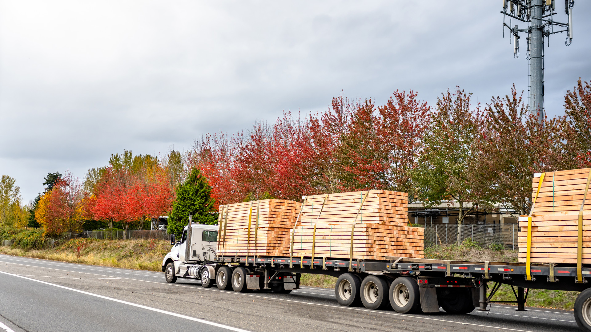 Powerful white big rig semi truck with day cab transporting lumber wood on two flat bed semi trailers running on the straight road with autumn trees