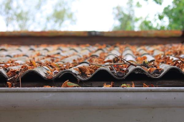 roof-cleaning-leaves.jpg