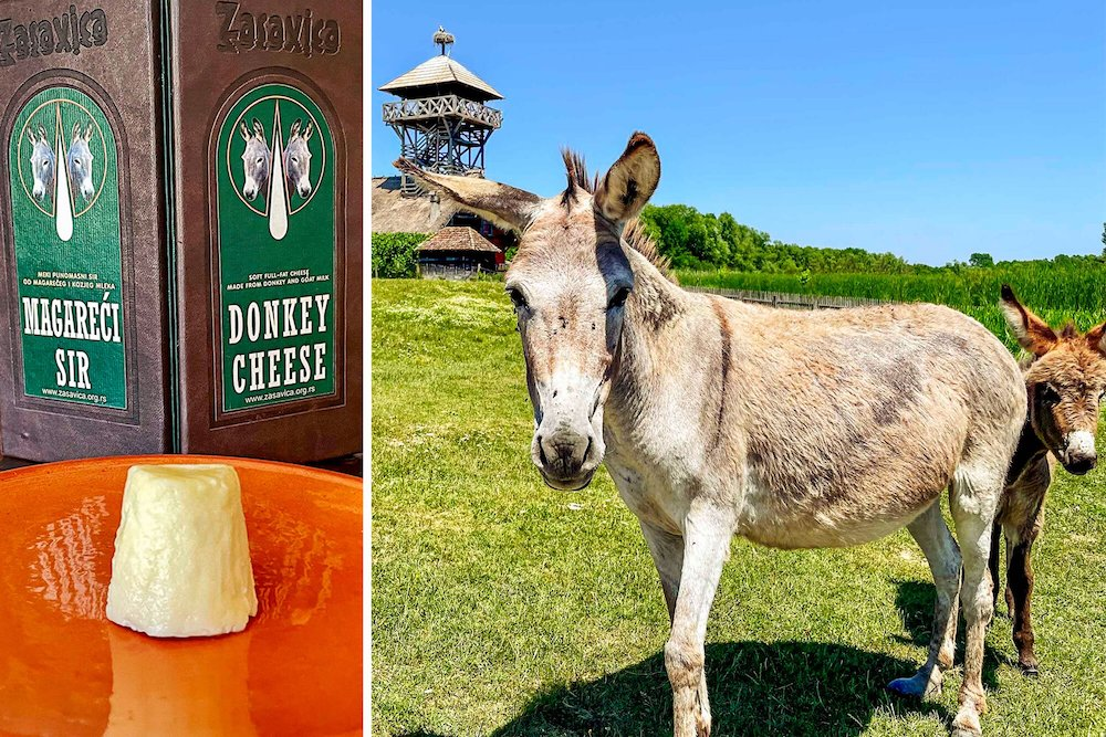 one_of_the_worlds_most_expensive_cheeses_comes_from_rescued_donkeys_1.jpeg