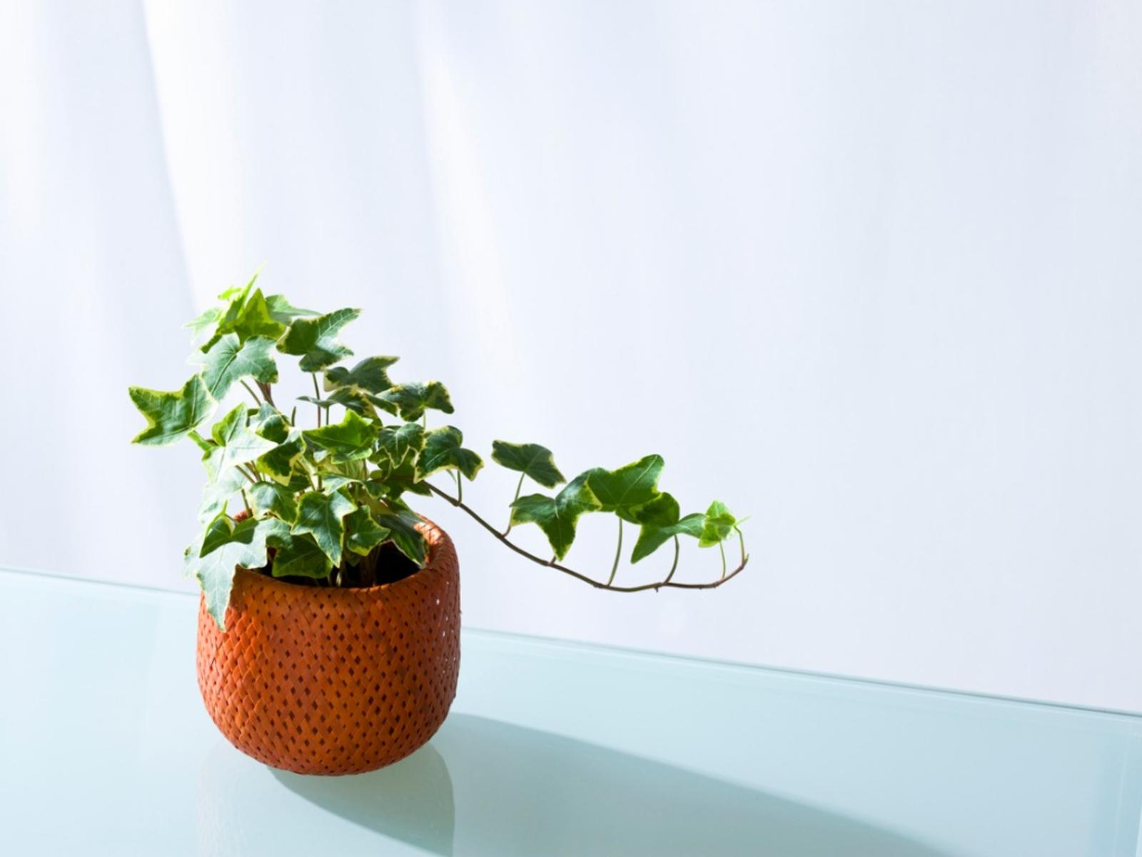 foliage-plants.jpg