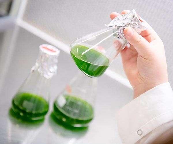 algae-living-biocatalysts-green-industry-hg.jpeg