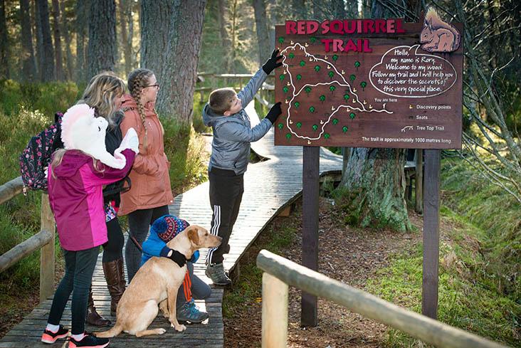 Dogs enjoy Landmark Forest Adventure Park