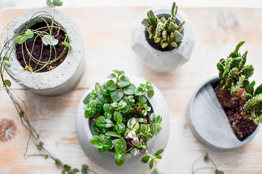 concrete-cement-diy-flowerpot.jpg