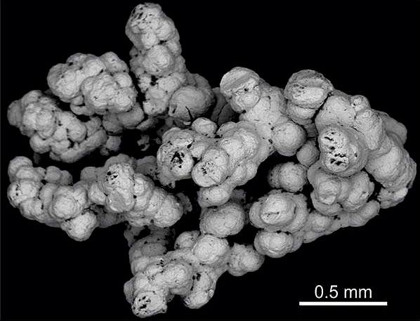 backscattered-electron-botryoidal-pt-pd-nugget-hg.jpg
