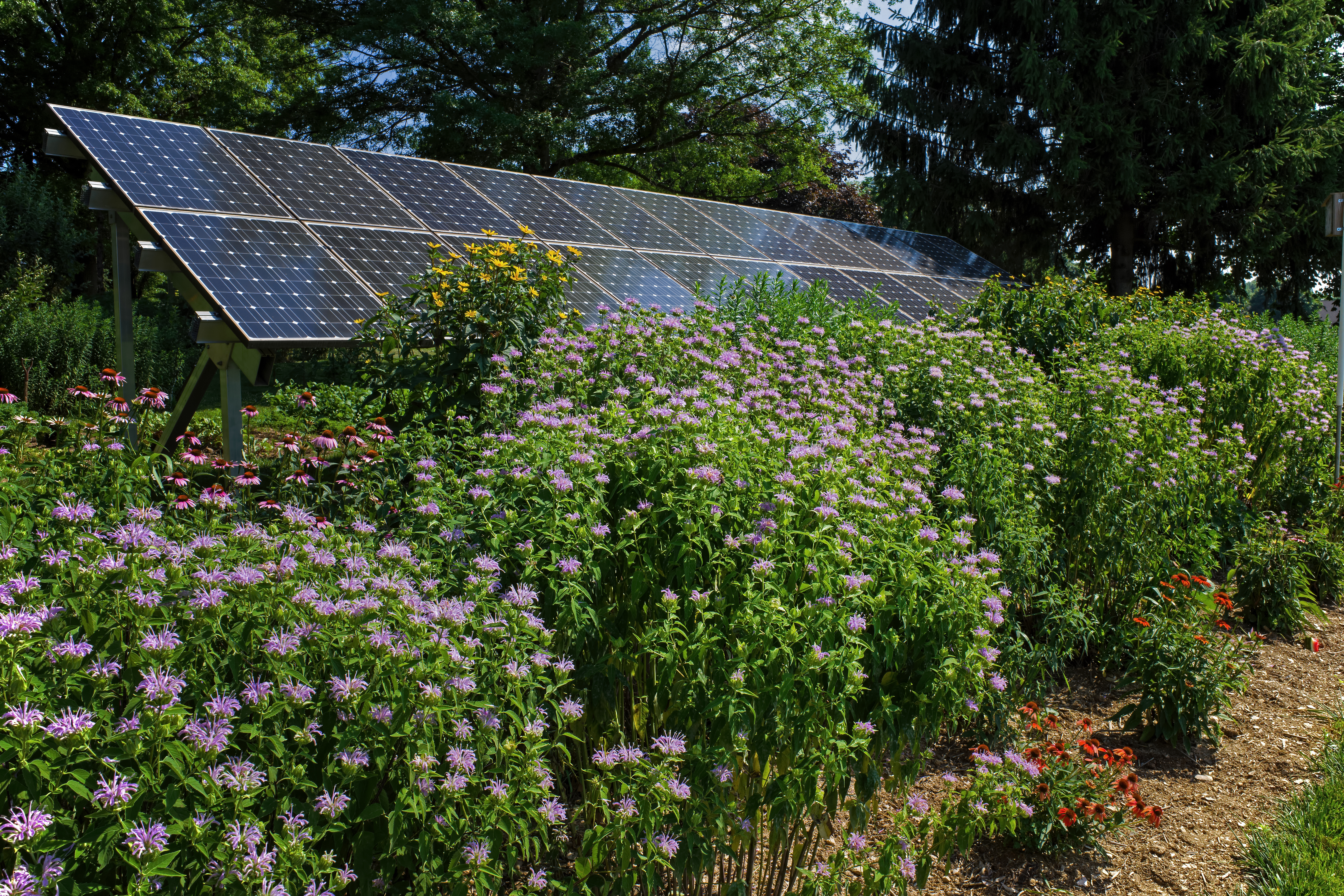 Pollinator garden, butterfly garden and solar panels on a bright summer's day.